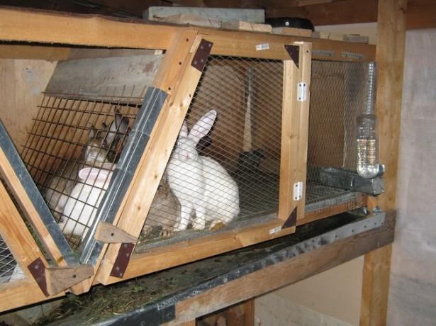 Выбираем качественные клетки для кроликов в своей домашней ферме