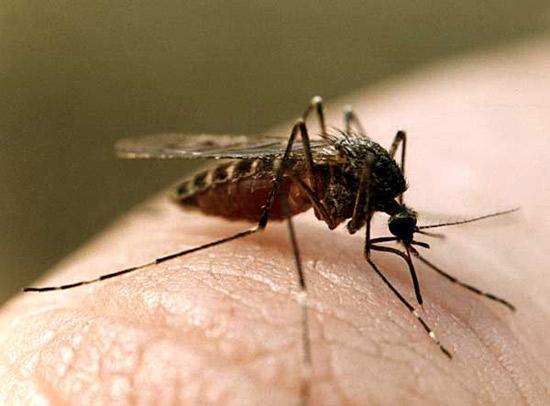 Почему комары кусают людей?