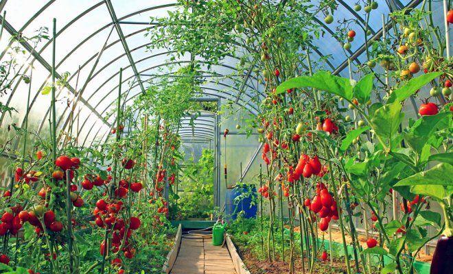 Как получить экологически чистые овощи из грядки