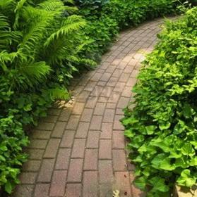 Украшаем сад вьющимися растениями