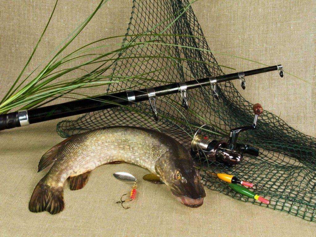 Как выбрать рыболовные снасти